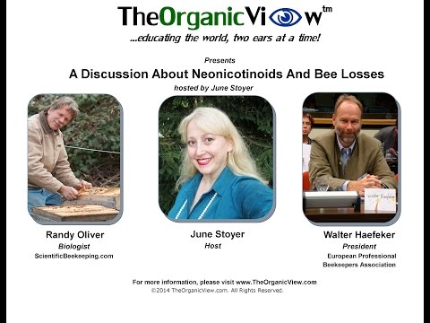 A Discussion About Neonicotinoids And Bee Losses