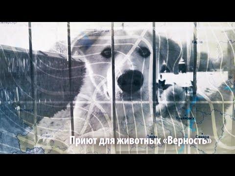 Экс-сварщик с приютом для собак | ЧЕЛОВЕК НА КАРТЕ