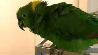 AMAZING TALKING PARROTS: What A Zoo! ©Karla K. Larsson