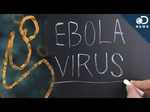 Everything You Need To Know About Ebola In Under 3 Minutes