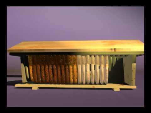backyardhive new dvd: alternative beekeeping using the top