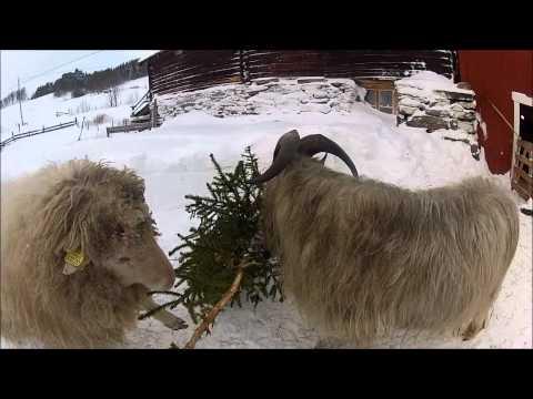 Lambert & Tor - Eat the Christmas Tree