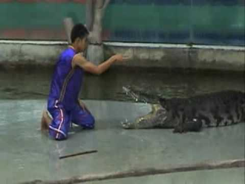 Pinoy Channel TV Untamed Uncut Crocodile Death Roll