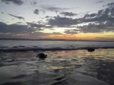 Nicaragua Beaches Surfing Nicaragua Beach Hostel