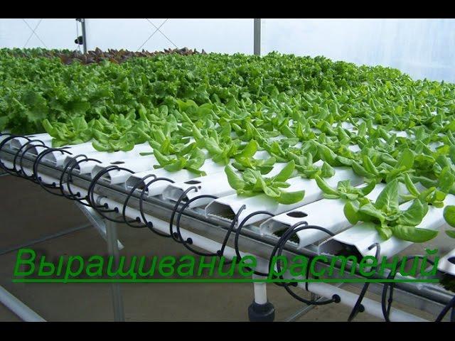 Способы выращивания в домашних условиях 318