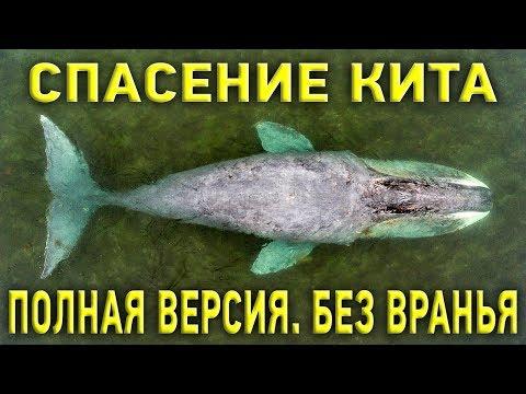 Гренландский кит и русское раздолбайство: как на самом деле спасали кита