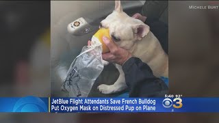 JetBlue Flight Attendants Credited For Saving Dog's Life During Flight