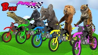 Animals Bike Race Wild Animals Animation Cartoon For Kids | Running Race Video For Children