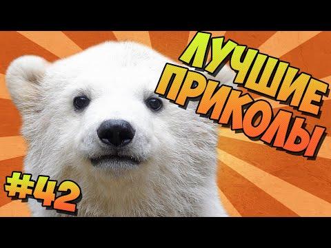 ЛУЧШИЕ ПРИКОЛЫ #42 ПОЛЯРНЫЕ МЕДВЕДИ