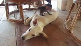 Little Monkey and Dog Have Fun Together