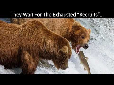 Are You Smarter Than A Bear? - MLSP's MLM Lead Generation Strategy Revealed