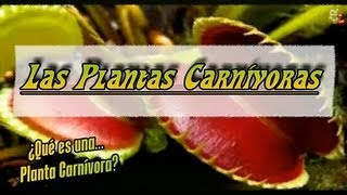 Cultivo y Cuidados de Plantas Carnívoras - Semillas de Plantas Carnívoras - Plantas Gigantes