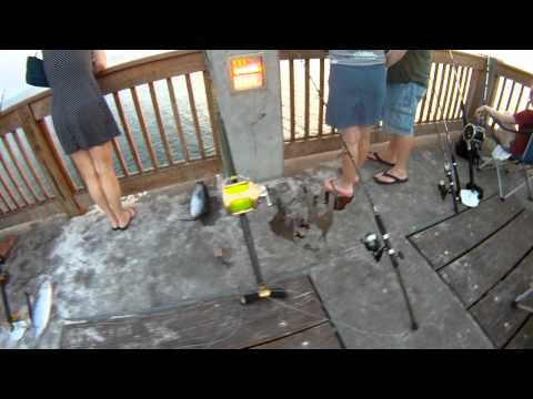 GoPro: 14 Shark Fishing Setup, Pier Fishing In The Gulf Of Mexico