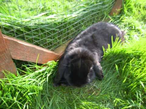 Good luck Alan at Eurovision from Alan & Baxter the rabbits! :D