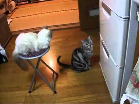 Кошак и холодильник » waboo.ru
