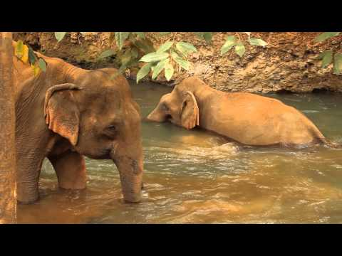 Elephant Valley Project - Mondulkiri, Cambodia.