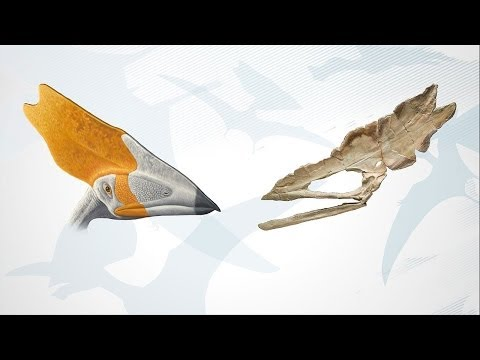 Why Did Pterosaurs Have Crests?