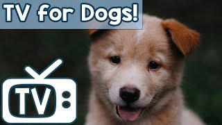 Calm Your Dog TV - TV for Stressed Dogs! Nature Footage with soothing Music  (Separation anxiety)