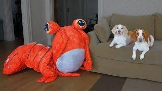 Dogs vs Giant Shrimp Prank! Funny Dogs Maymo & Potpie