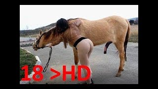 Download LIVE: خيل وخيالة - Amazing A Girl A Horse - Knight Horses - HorseTraining - How to Teach Your Horse 3Gp Mp4