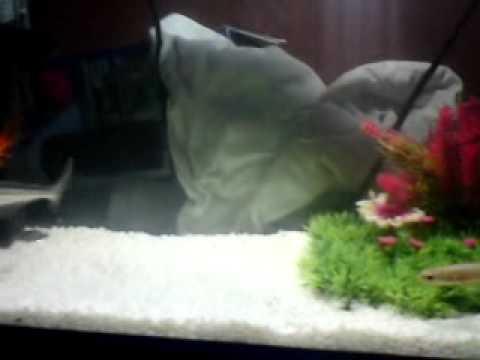 akvaryum köpek balığı