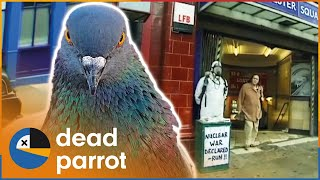 Big Pigeon Prank - Trigger Happy TV