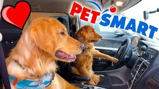 Sammie & Earl Drive Car to Buy New Dog Toys!