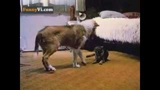 Cat VS dog = Chaos :) - With music :)