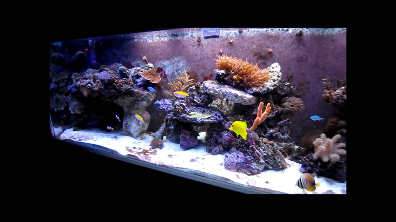 125 gallon saltwater tank Update 5 (new aquascape) - YouTube