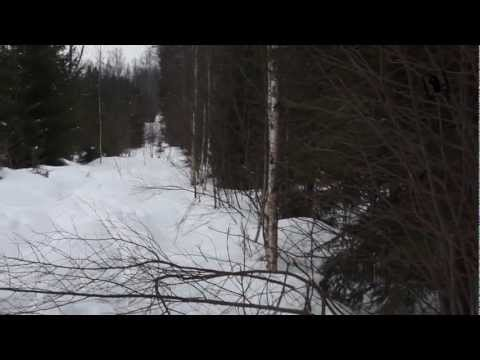 Wild Boar Hunting In Winter video