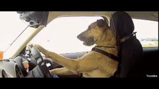 Cães e gato engraçados Acting Like Humanos - Animais de estimação engraçados