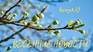 Выпуск 23. Детские Весенние Новости