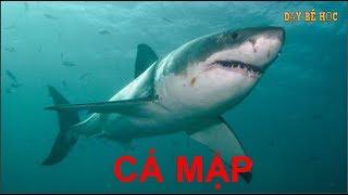 Dạy bé học con vật | Bé nhận biết sinh vật biển nhanh nhất | Bài 118