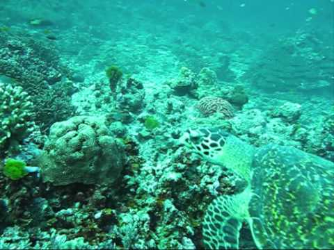 Diving in Phuket - Dive Travel Asia