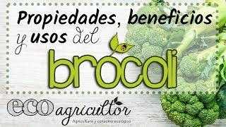 Propiedades, beneficios y usos del BRÓCOLI o BRÉCOL - ECOagricultor