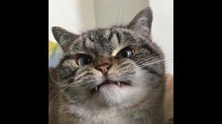 Котики   приколы с котами, коты против огурцов  Luyba Ray
