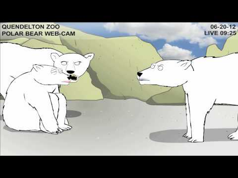 Teen Polar Bear Cam