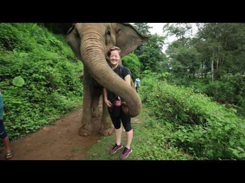Elephant Nature Park visit Chiang Mai!