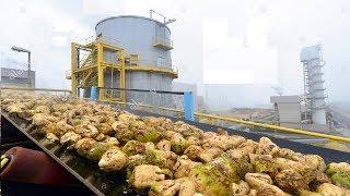 Beautiful Modern Technology Factory Sugar Beet Processing Plant Automatic
