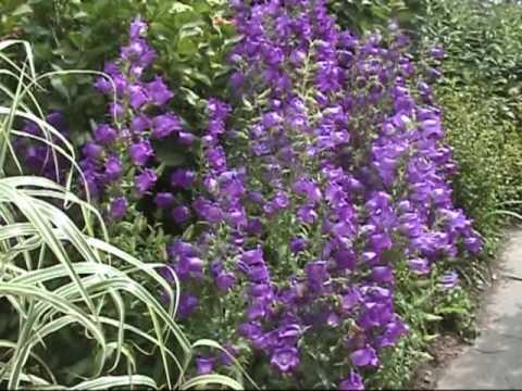 Great Dixter Flower Garden
