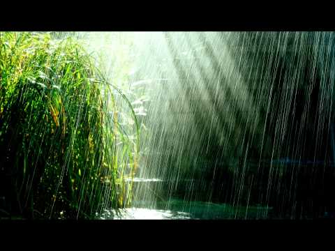 Tropical storm - relaxing tropical rain with birds chirping