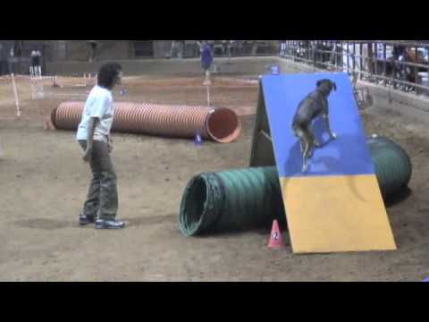 Dog Agility Bloopers