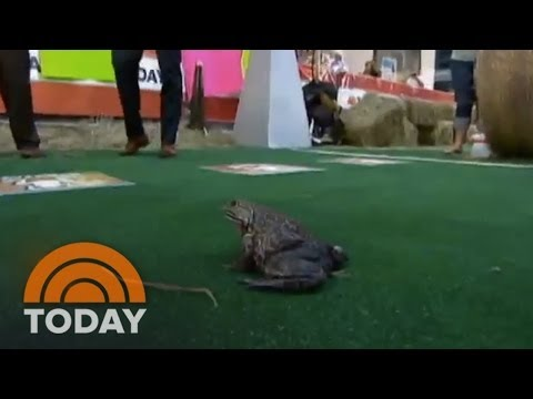 Savannah Guthrie HATES Frogs   Archives   TODAY