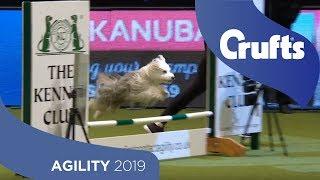 Agility Championship Round 2 – Agility - Small   Crufts 2019