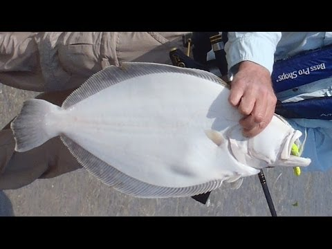 How to Catch Flounder from Shore with Bucktails and Gulp