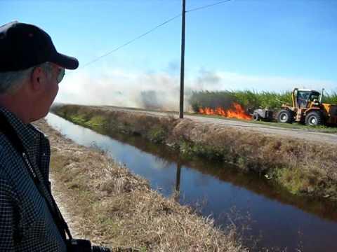 Sugar cane field burn