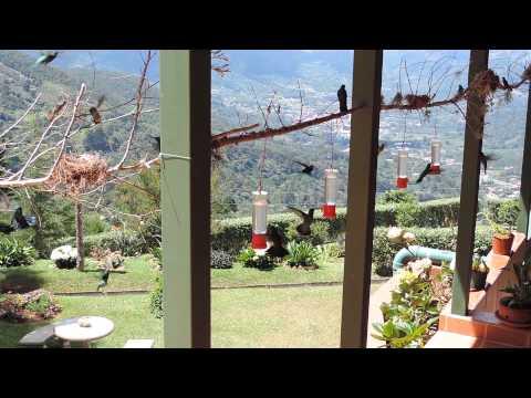 20140824 Hummingbirds at Quinta GALEON Costa Rica DSCN8064
