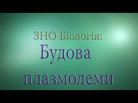 ЗНО Біологія  Будова плазмолеми