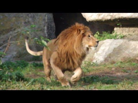 Zoo W Warszawie [HD]