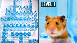 Hamster Vs Cat: Water Bottle Maze Challenge